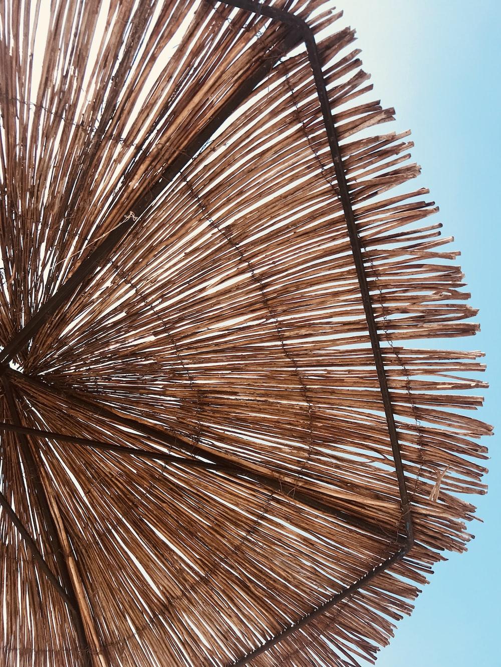 brown hay umbrella under blue sky