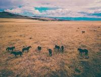 animals in farm during golden hour