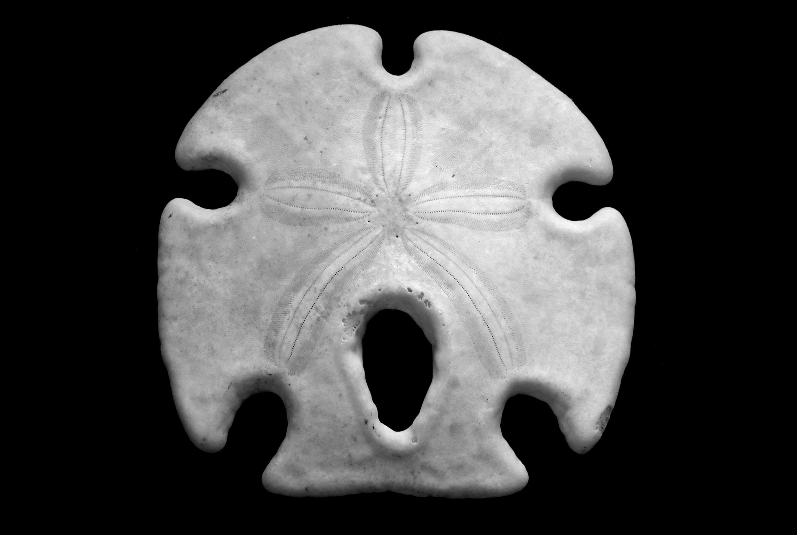 closeup photography of white stone