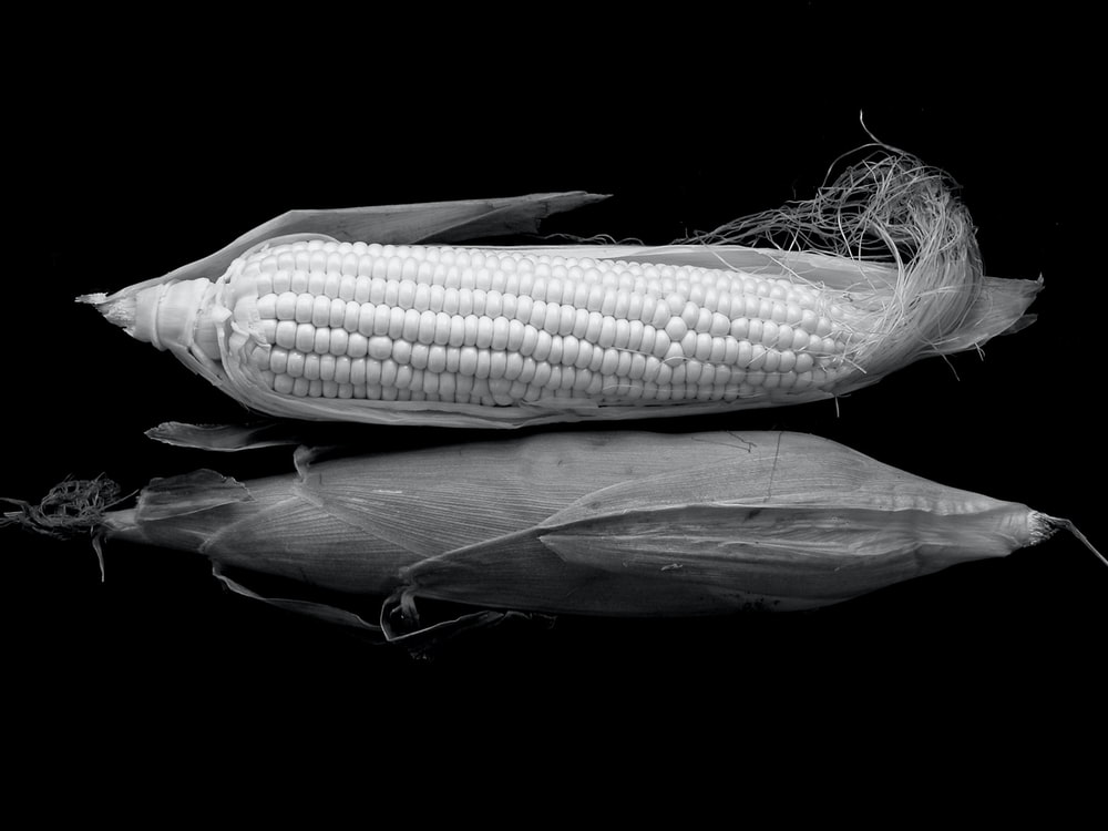 grayscale photo of corn on black surface