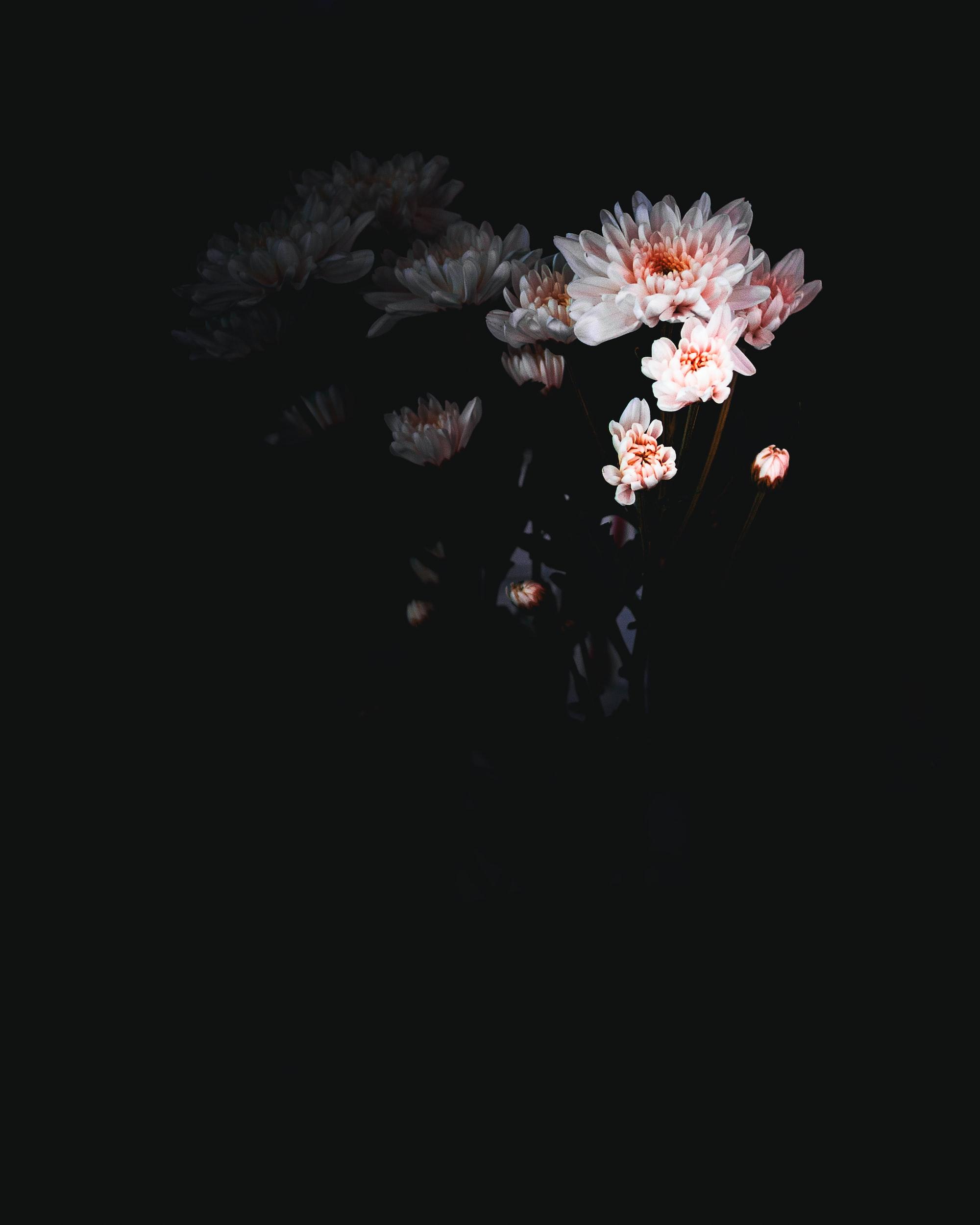 White flowers dark background