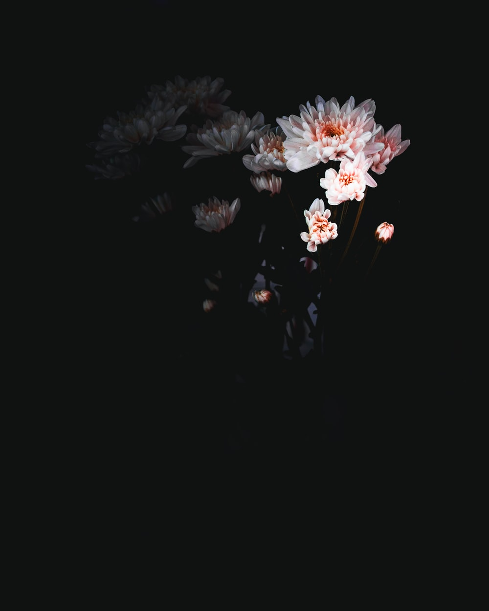 White Flowers Dark Background Photo By Yousef Alfuhigi