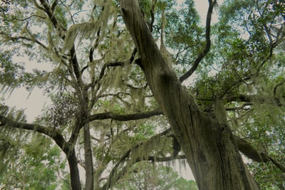 low-angle photography of green leaf trees at daytime south carolina zoom background