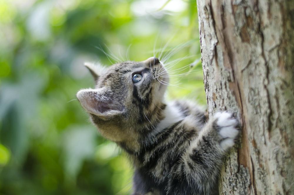 selective focus photography of gray tabby kitten climbing a tree