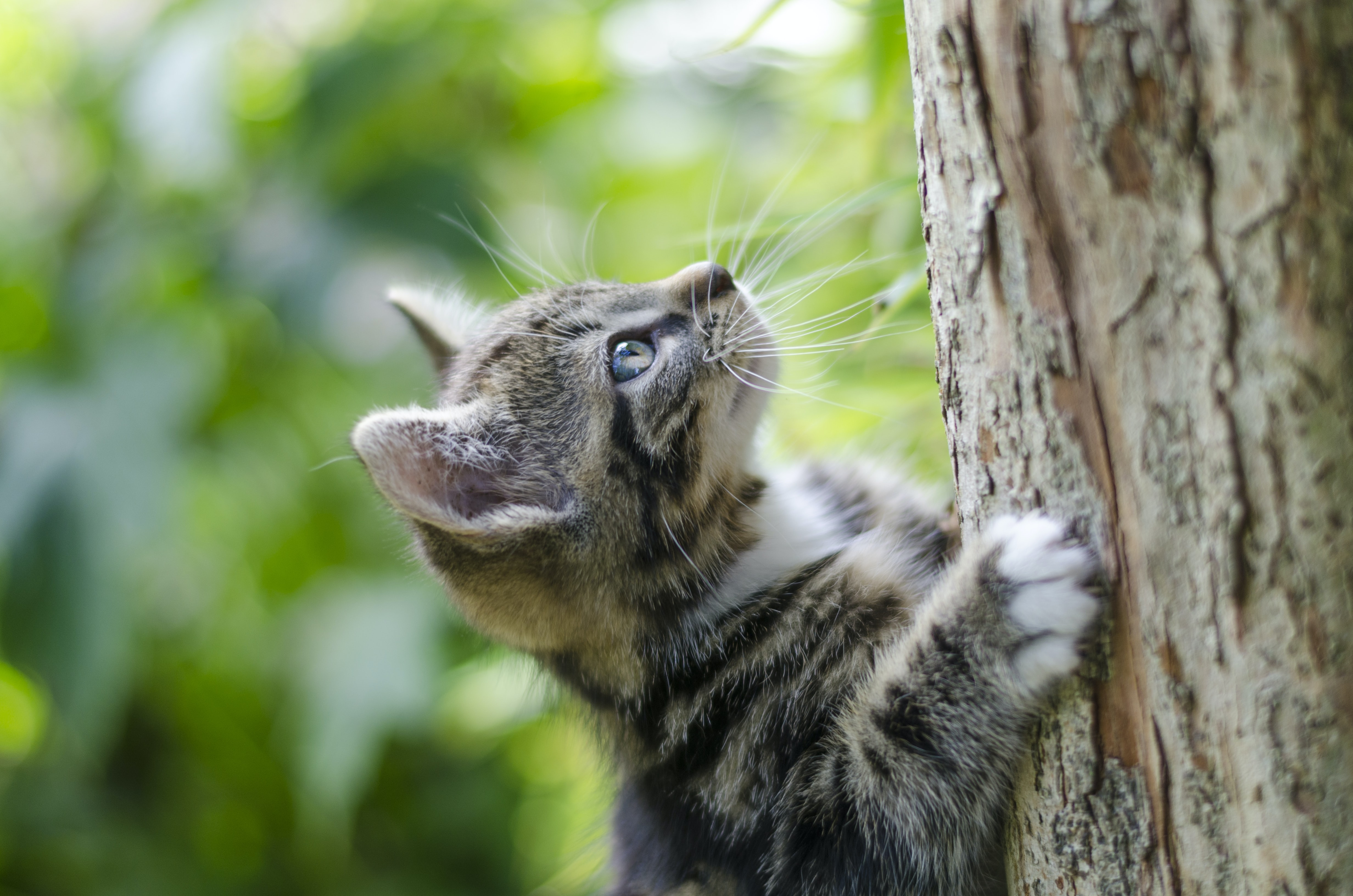 selective focus photography of gray tabby kitten climbing a tree