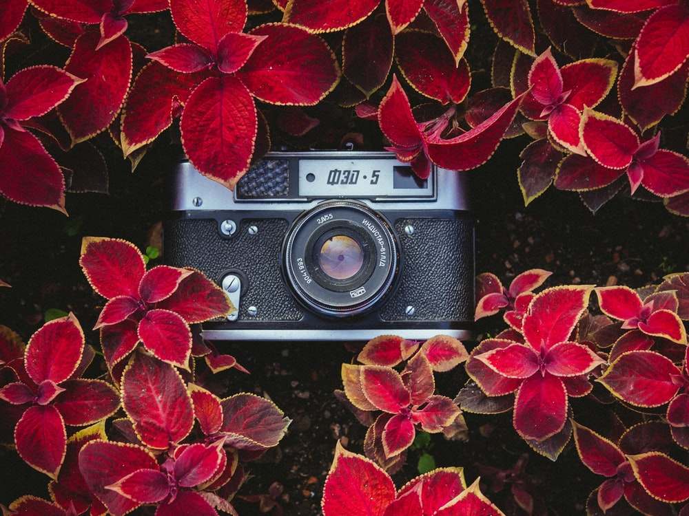 black and gray point-and-shoot camera on red plants