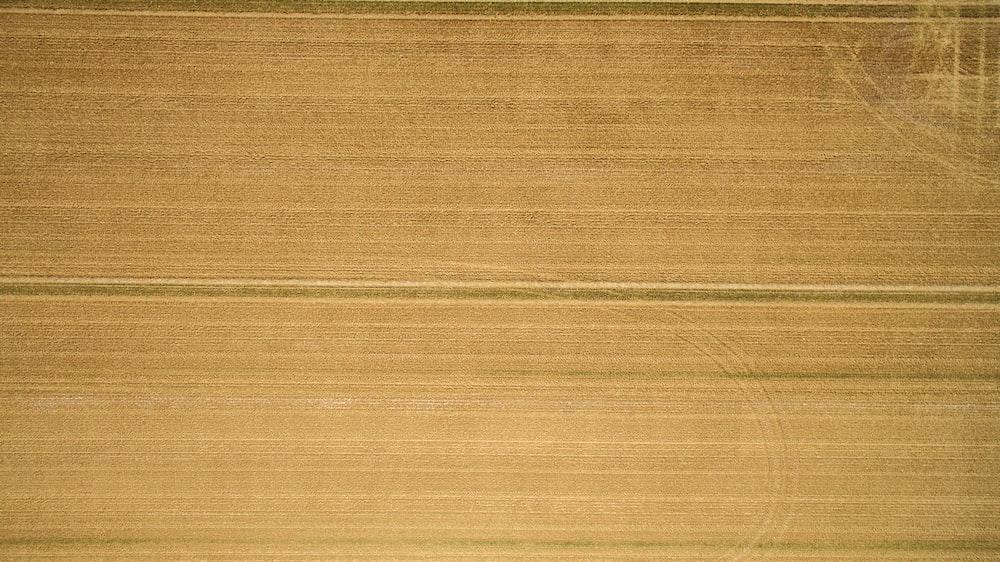 A closeup of a hardwood plank.