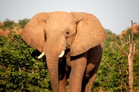 brown elephant beside green leafed trees at daytime