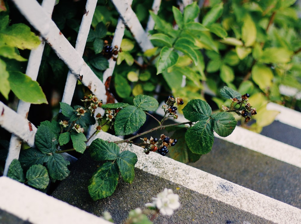 close-up photography of green leafed plants beside white wooden fence