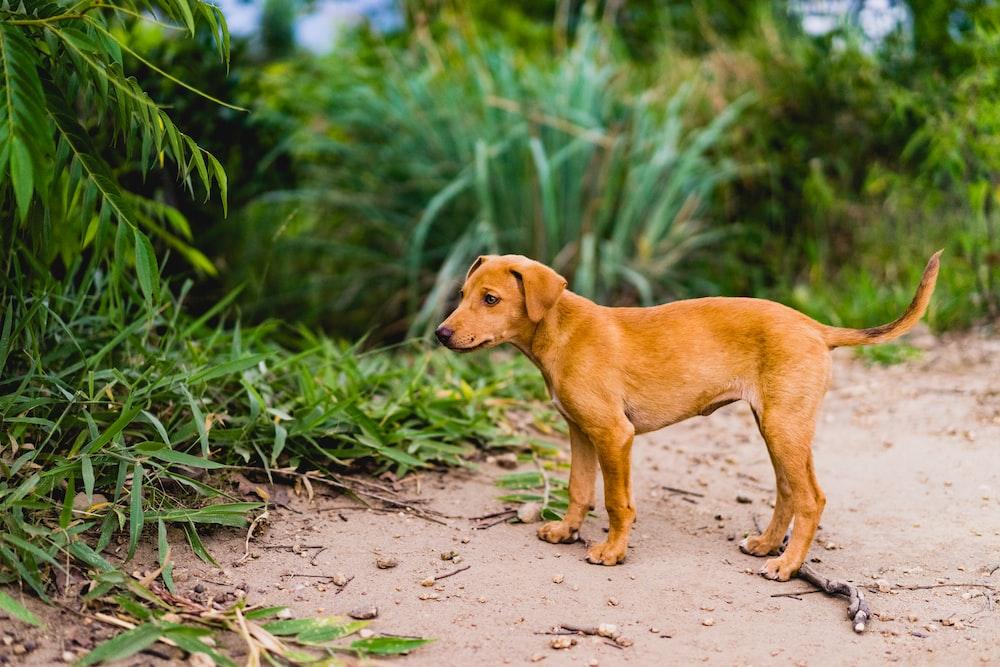 tan puppy near green grass