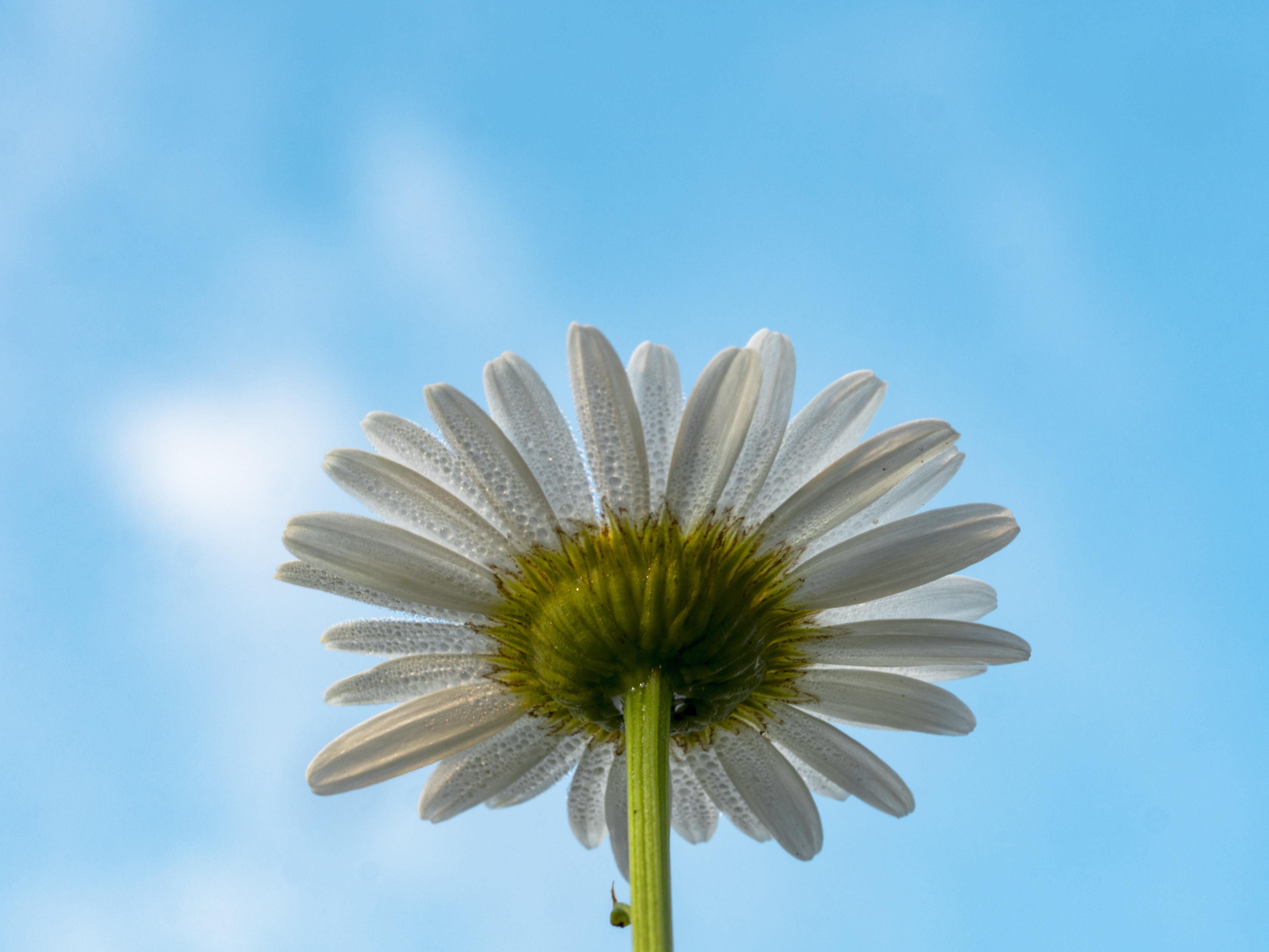 bottom view of white flower