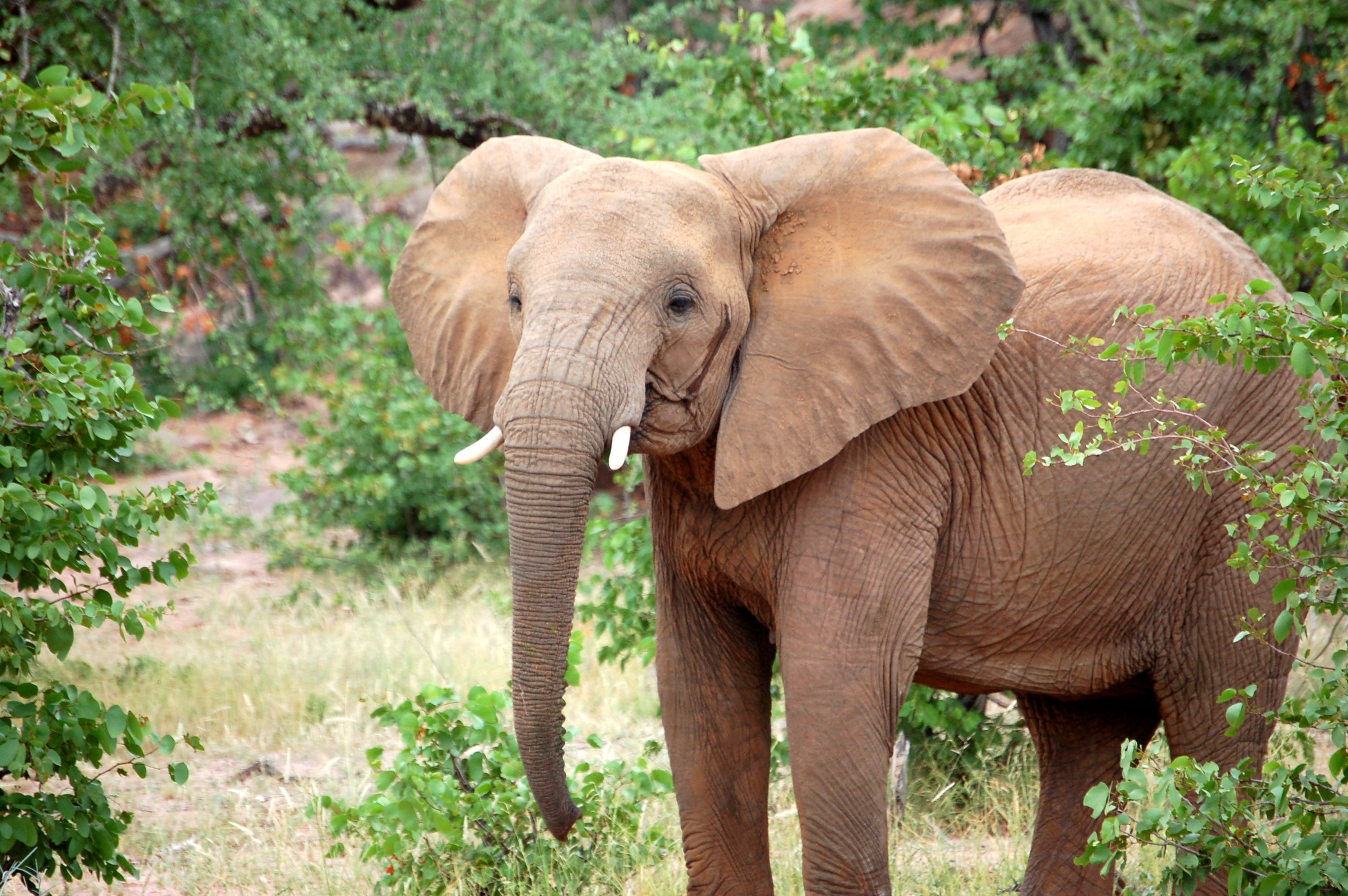 brown elephant beside green leaves