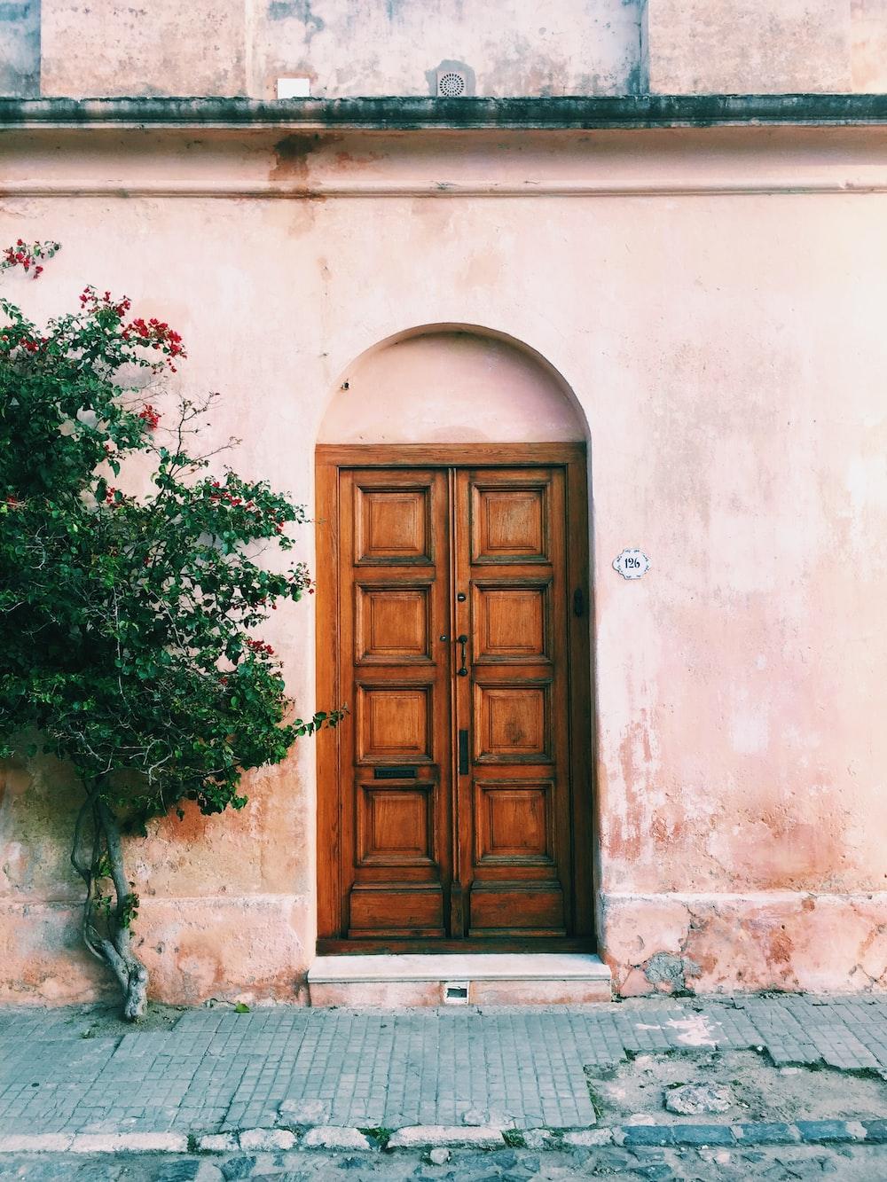 green plants beside brown wooden door