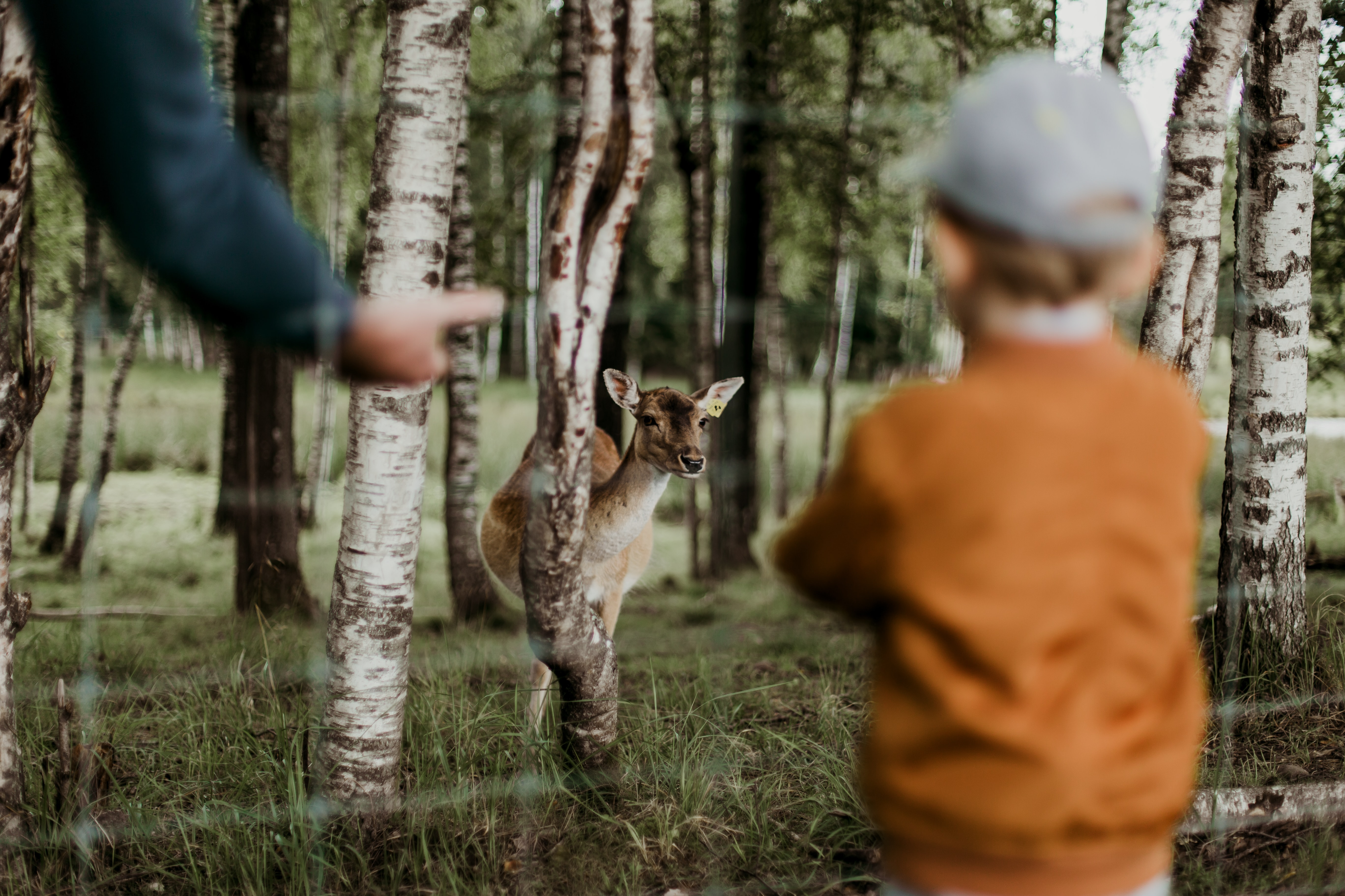 boy watching brown deer beside trees