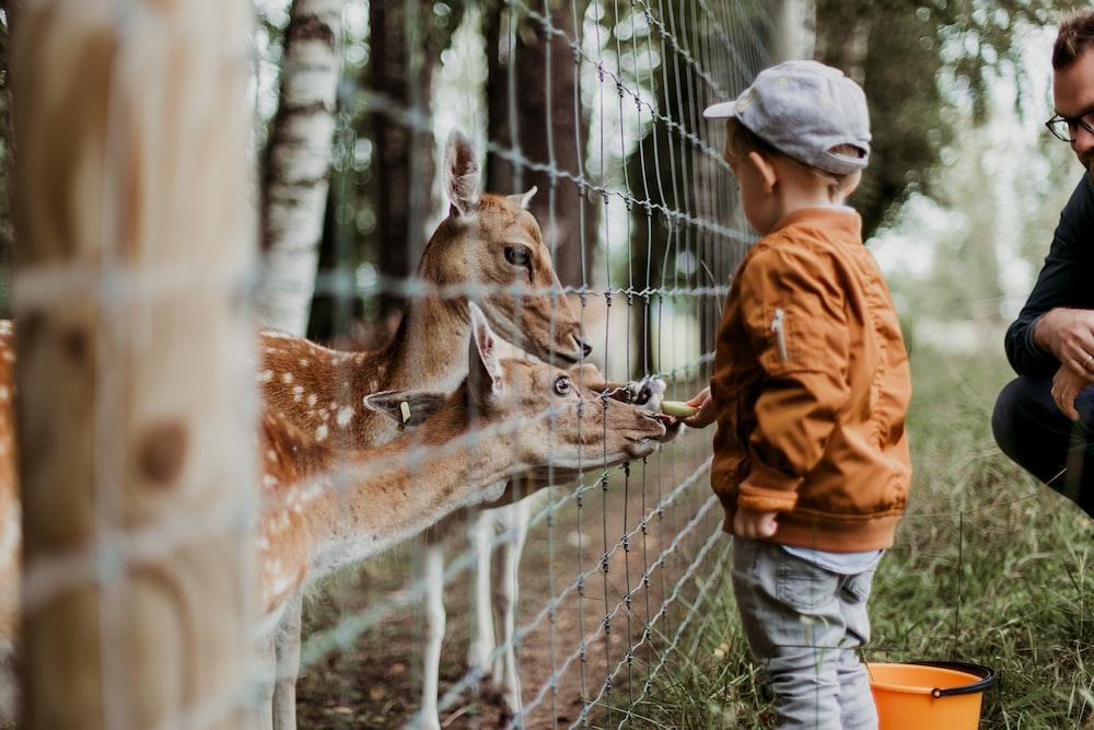 boy feeding a animal during daytime