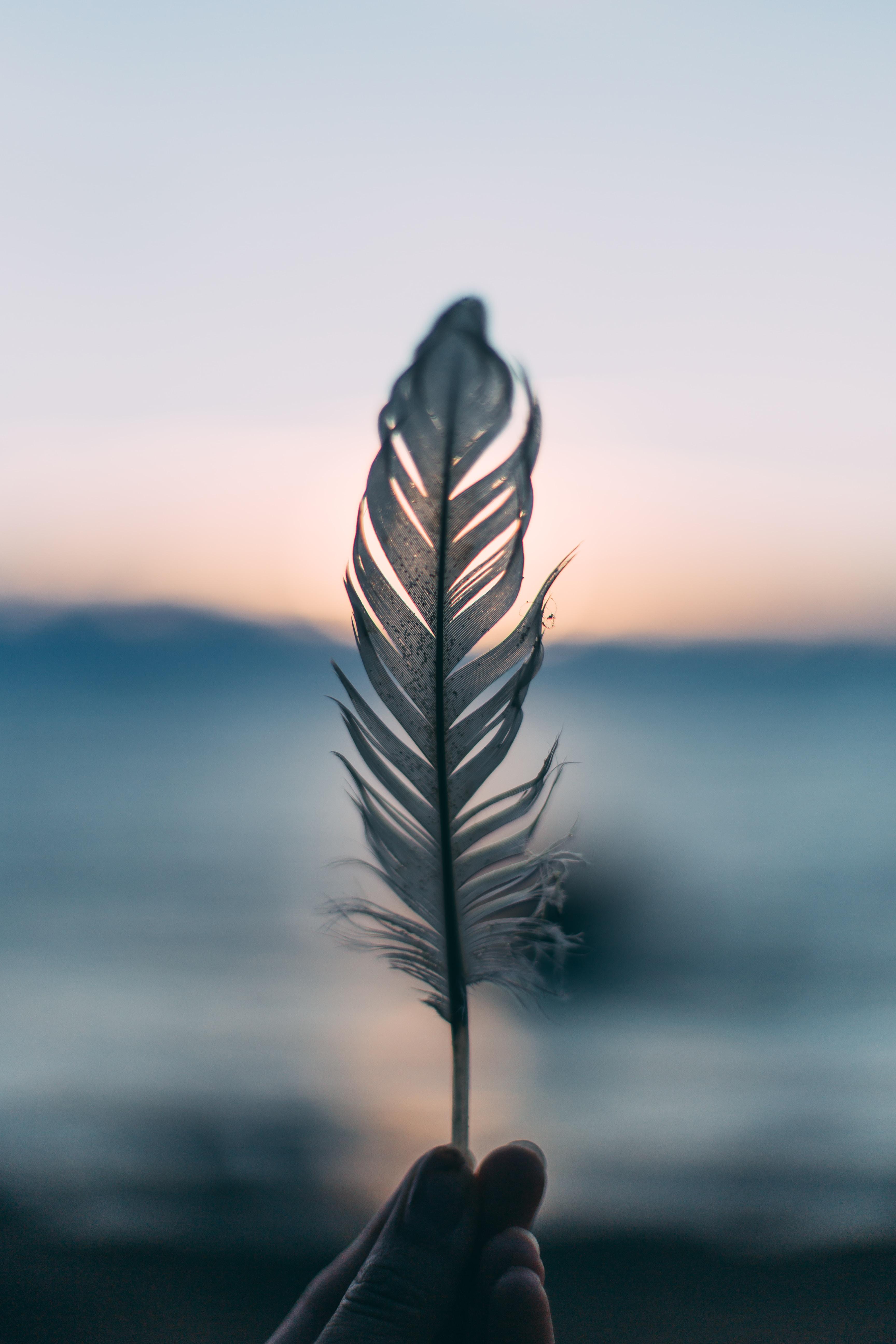 Wings Of Courage poem stories
