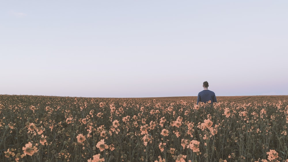 man in black shirt standing in the middle of peach-colored flower field under gray skies
