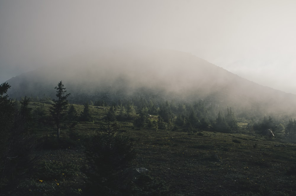 trees covering with fog