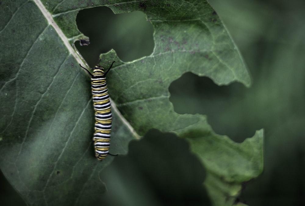 white, yellow, and black worm