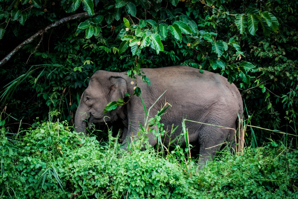 photo of gray elephant near trees