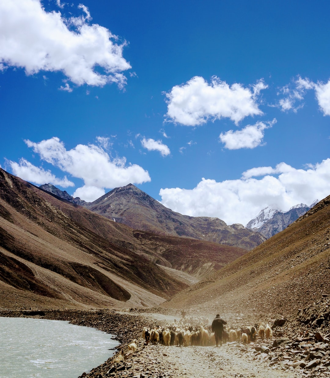 Caught this shot while trekking in the Spiti Valley of northern India. The herd was covering the entire road.