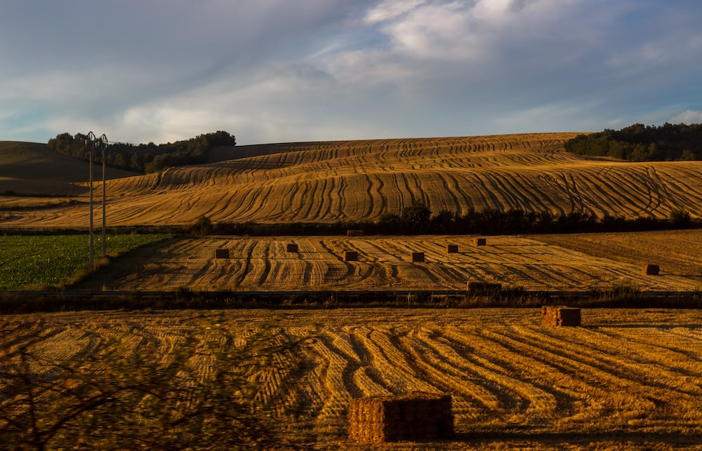 Wavy lines of crop in a farm field in Basque Country
