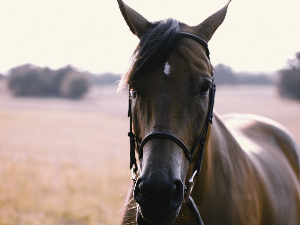standing brown and black horse in selective focus photography