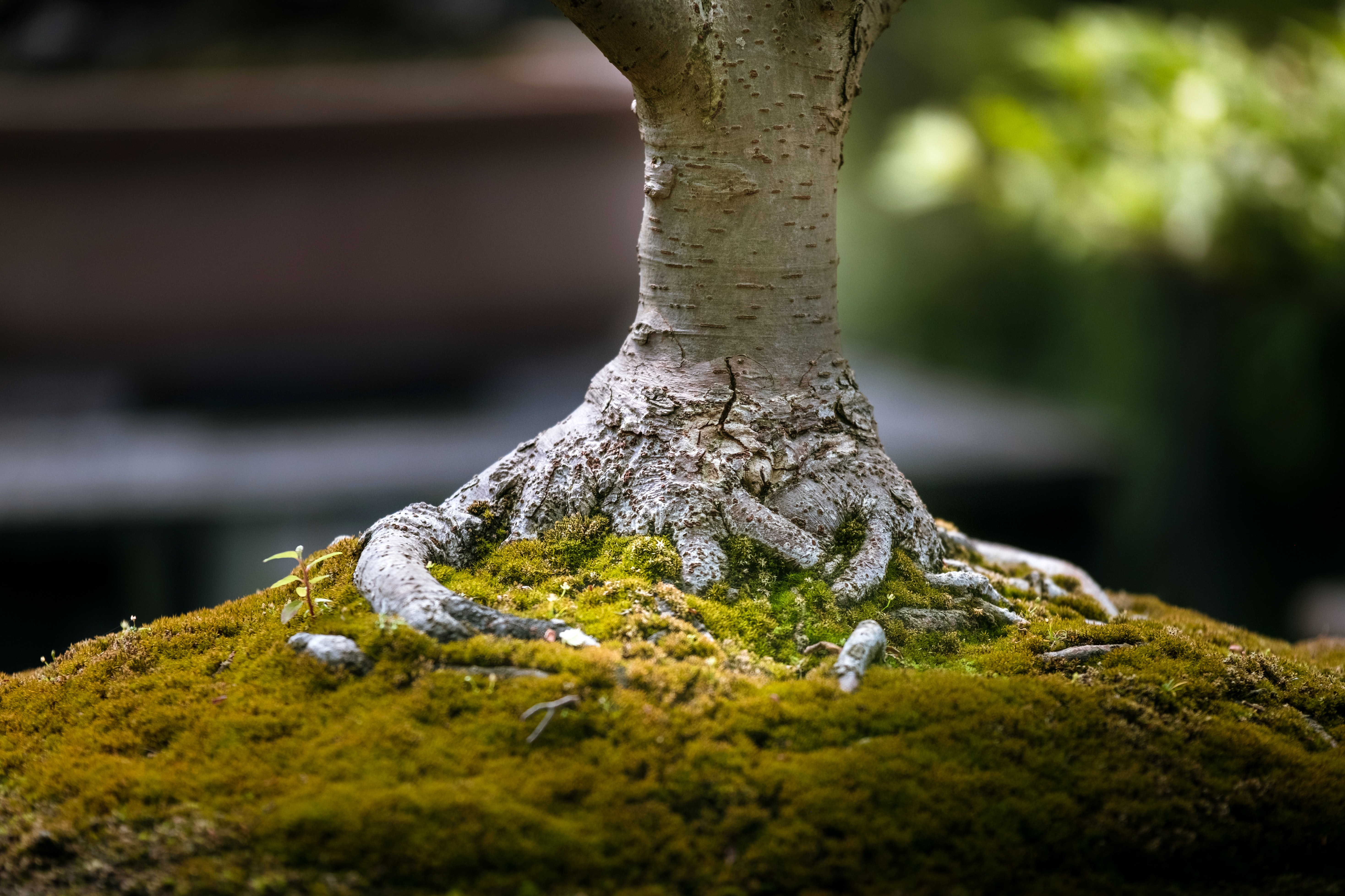 shallow focus of tree trunk