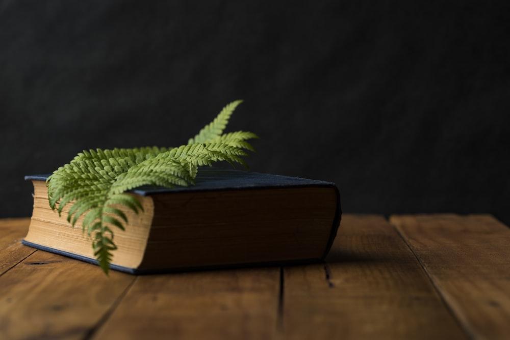 green leaf on top of blue hardbound book