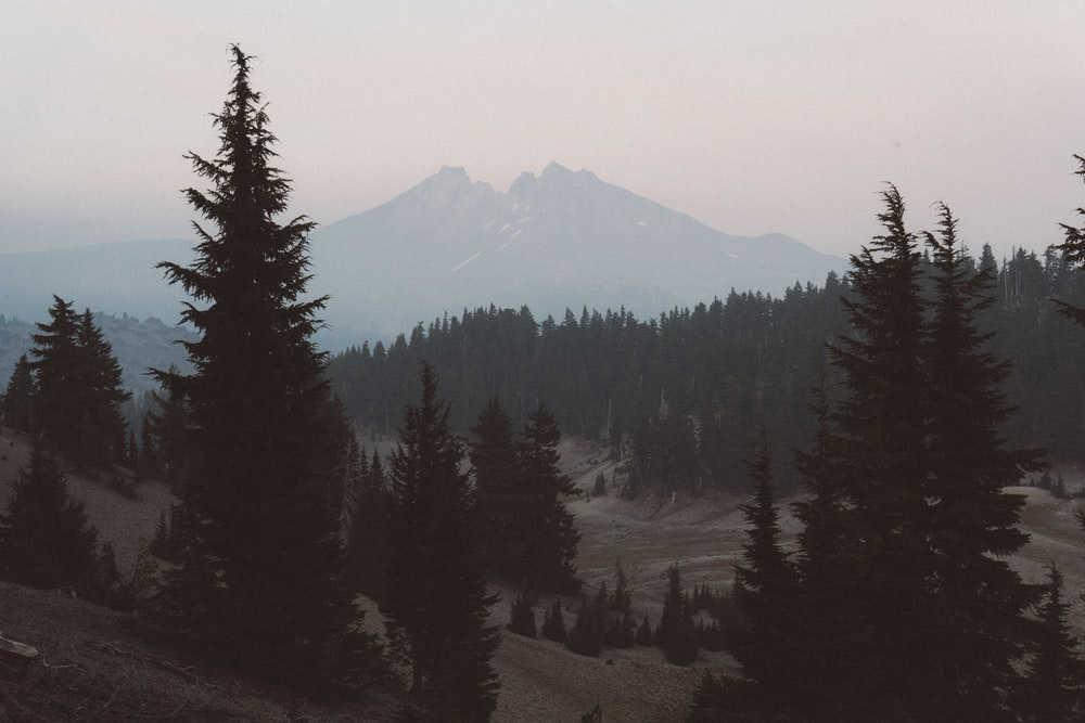 trees on body of mountain