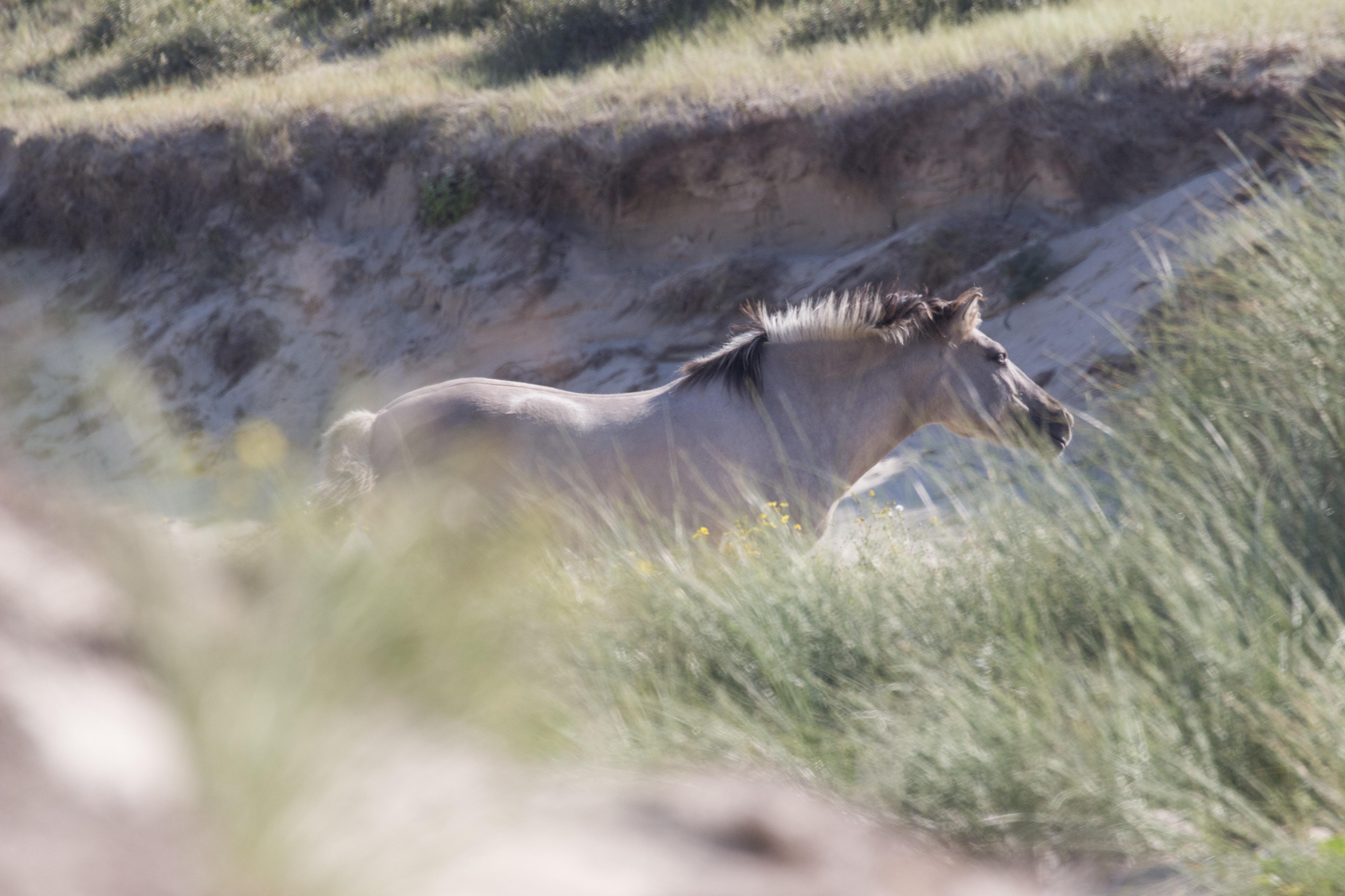 beige horse near grasses during daytime