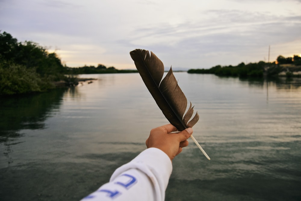 person holding black feather