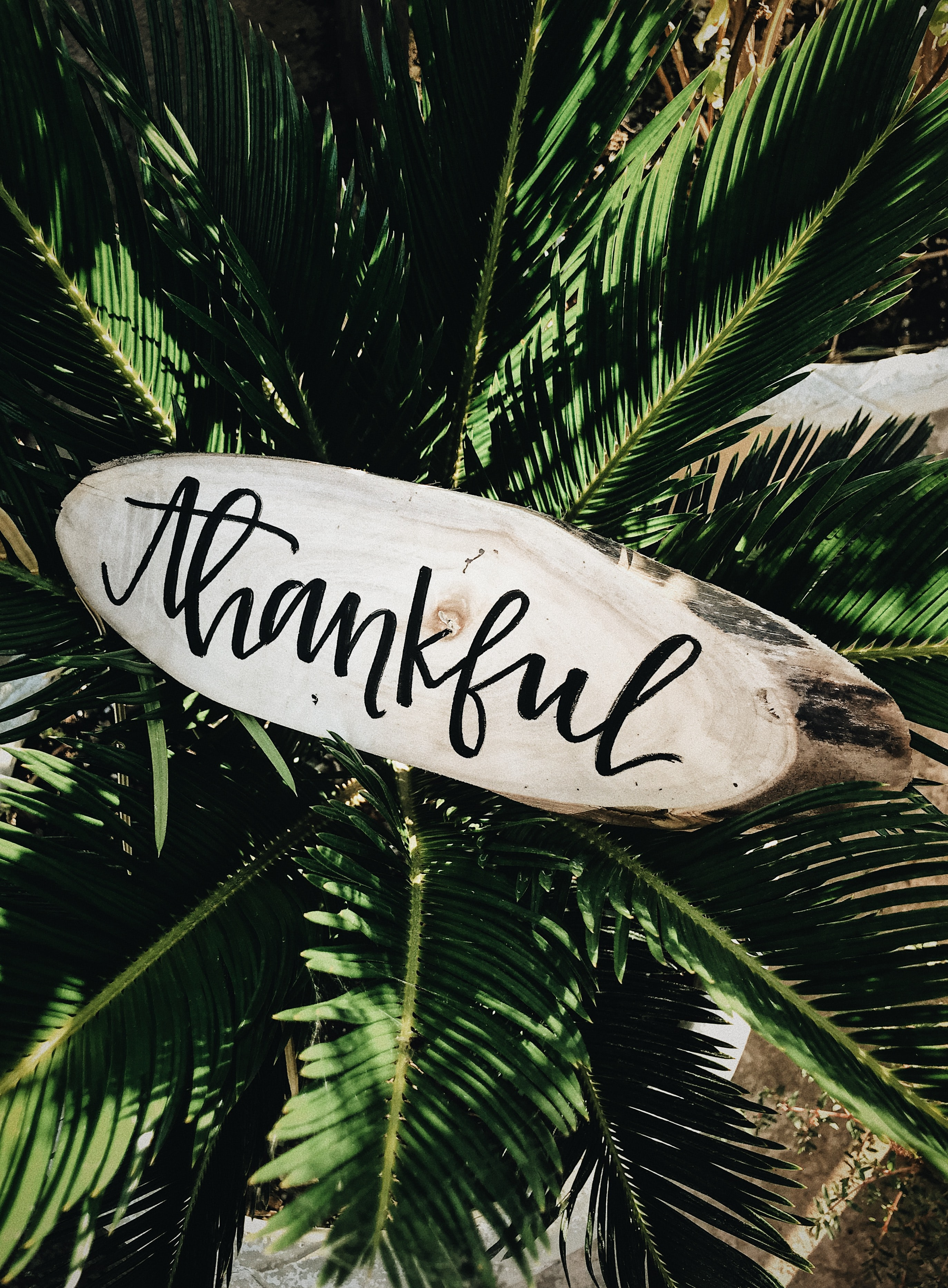 "A ""Thankful,"" note on top of an artificial tree."