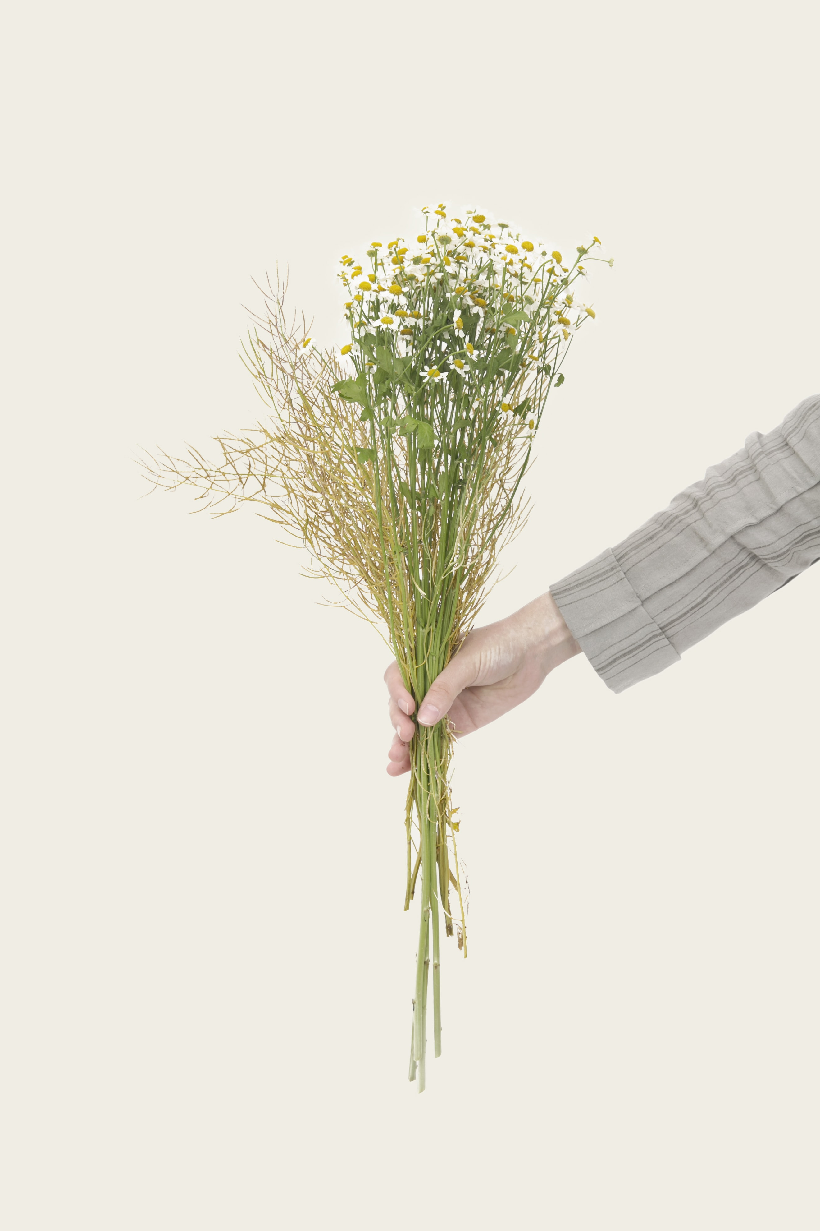 person holding bouquet of daisy flowers