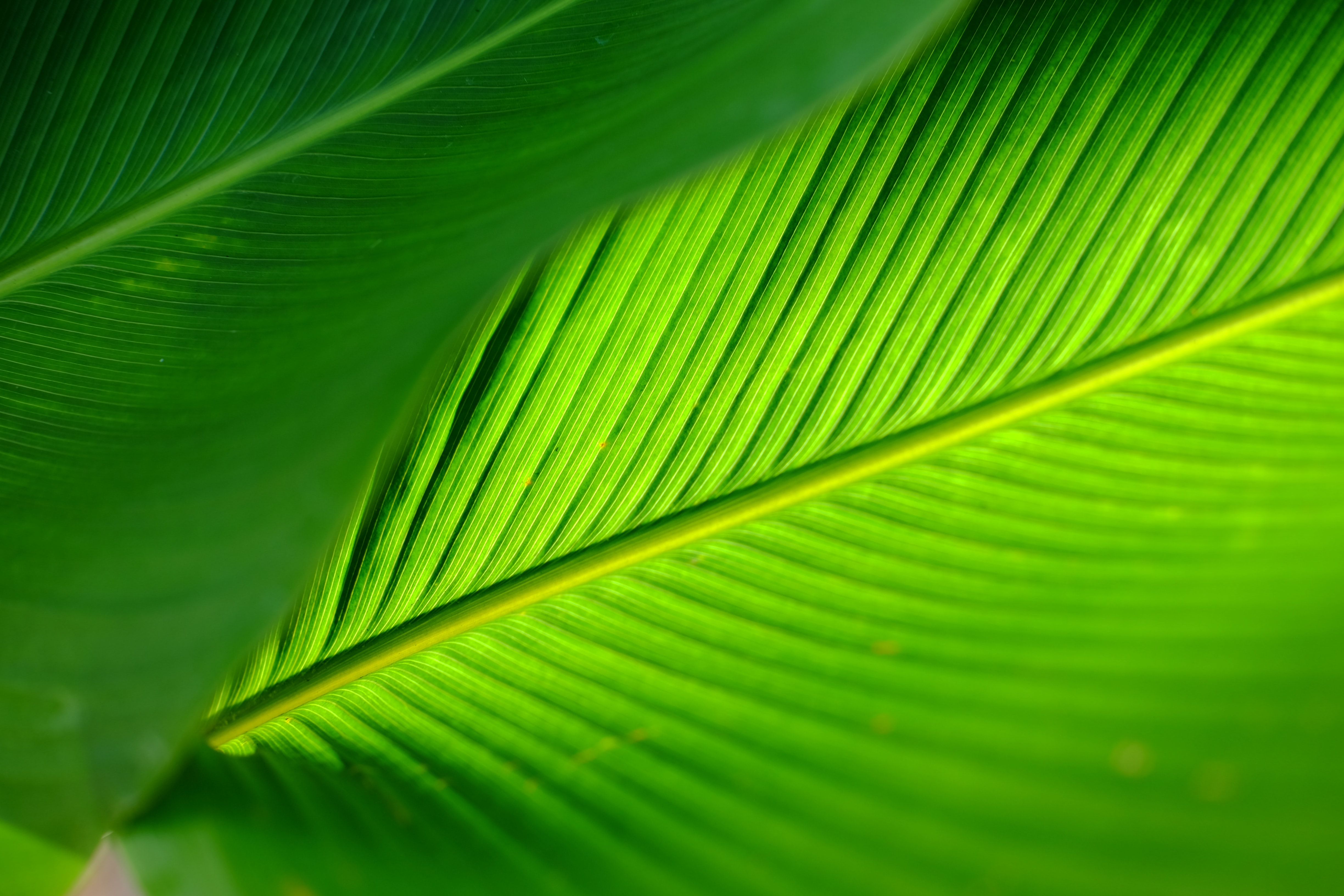 green leafed palm