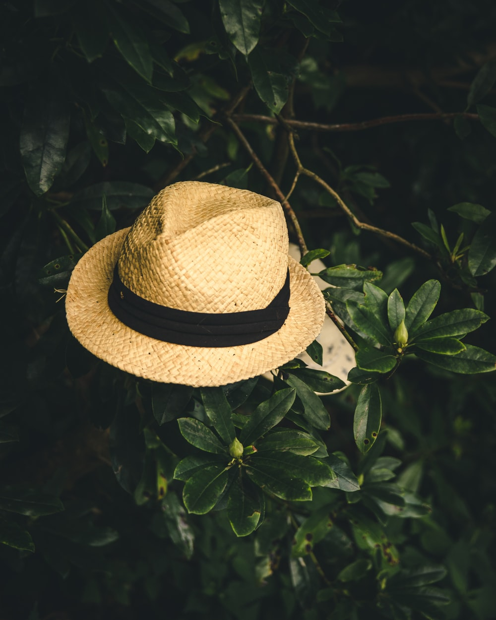 beige straw fedora hat on green leafed plant