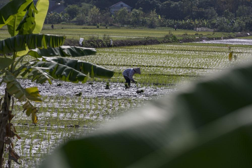 man farming during daytime