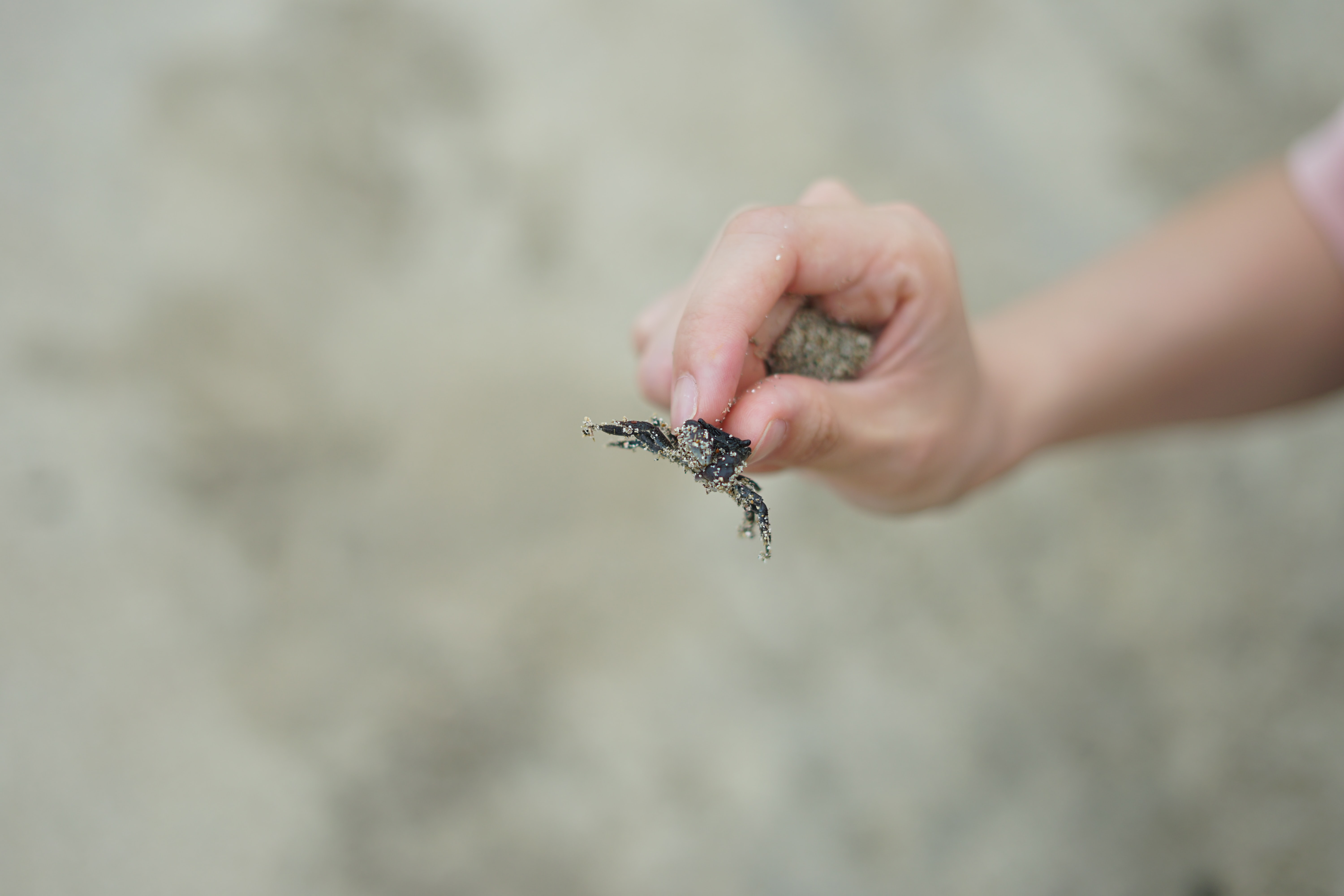 person holding black crab
