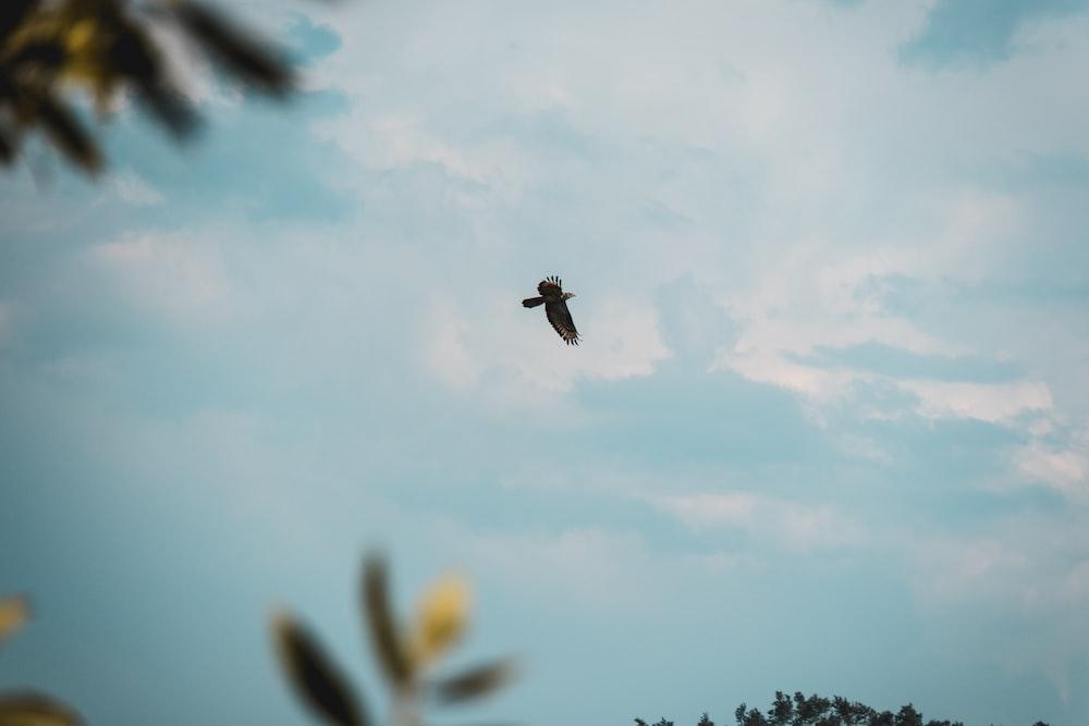 black bird flying