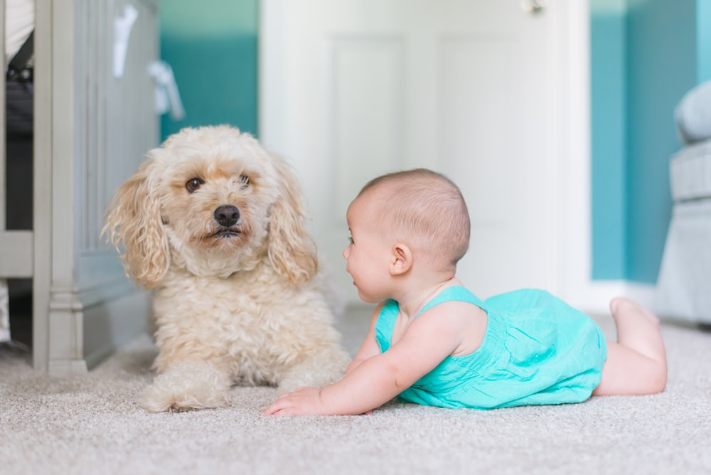 baby crawling near long-coated brown dog near door