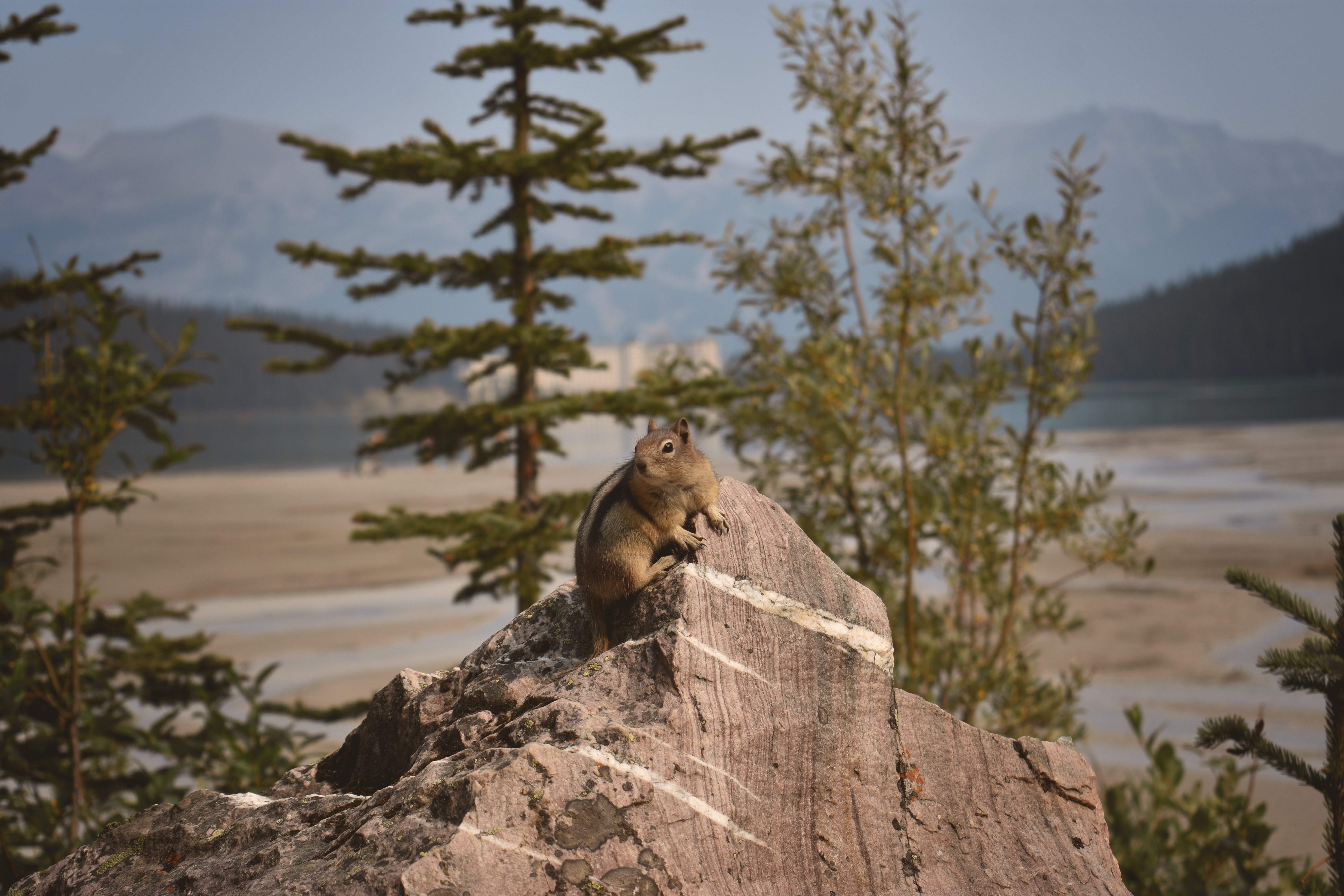 low-angle of squirrel on rock