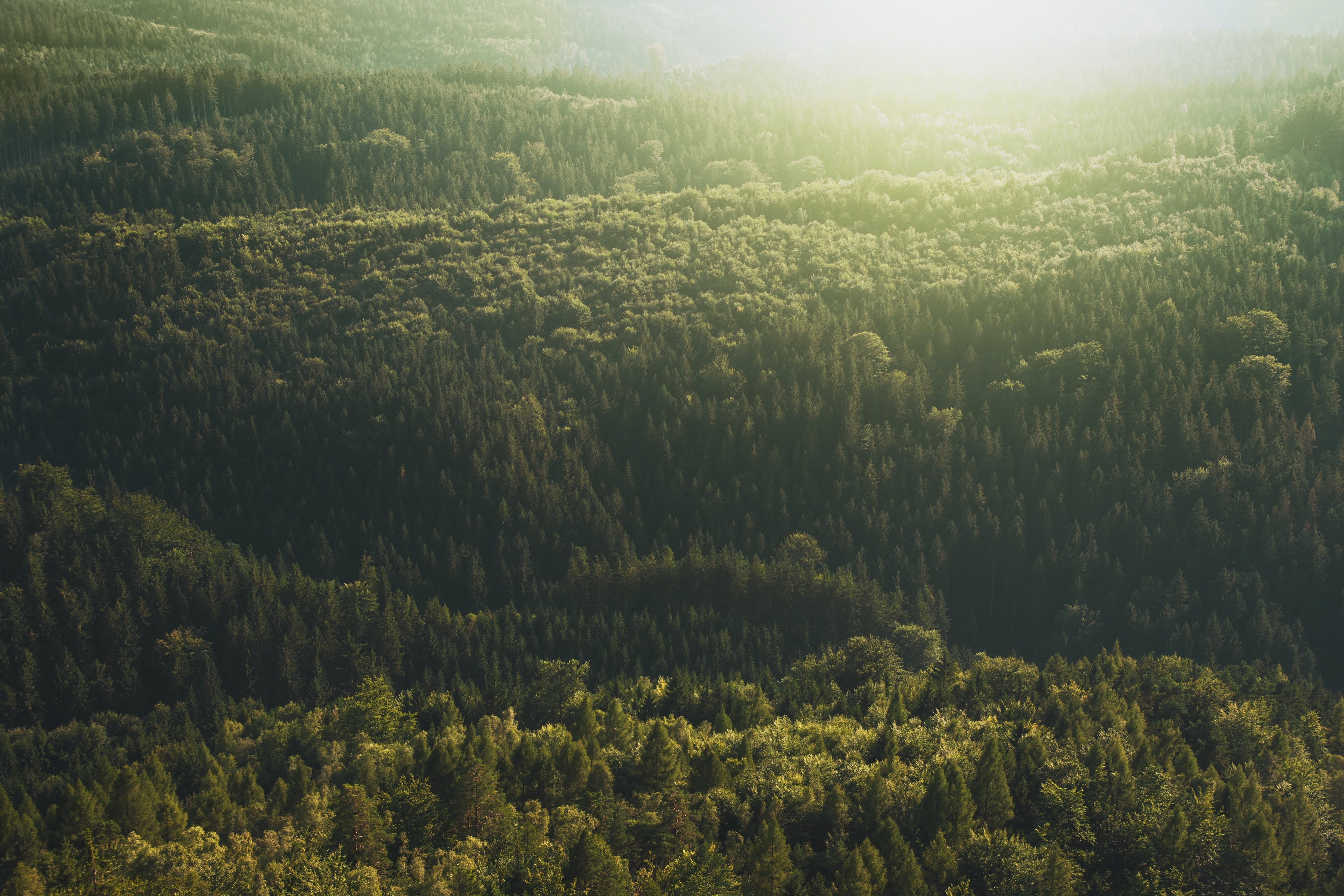 Sun shines on the horizon over a green forest landscape