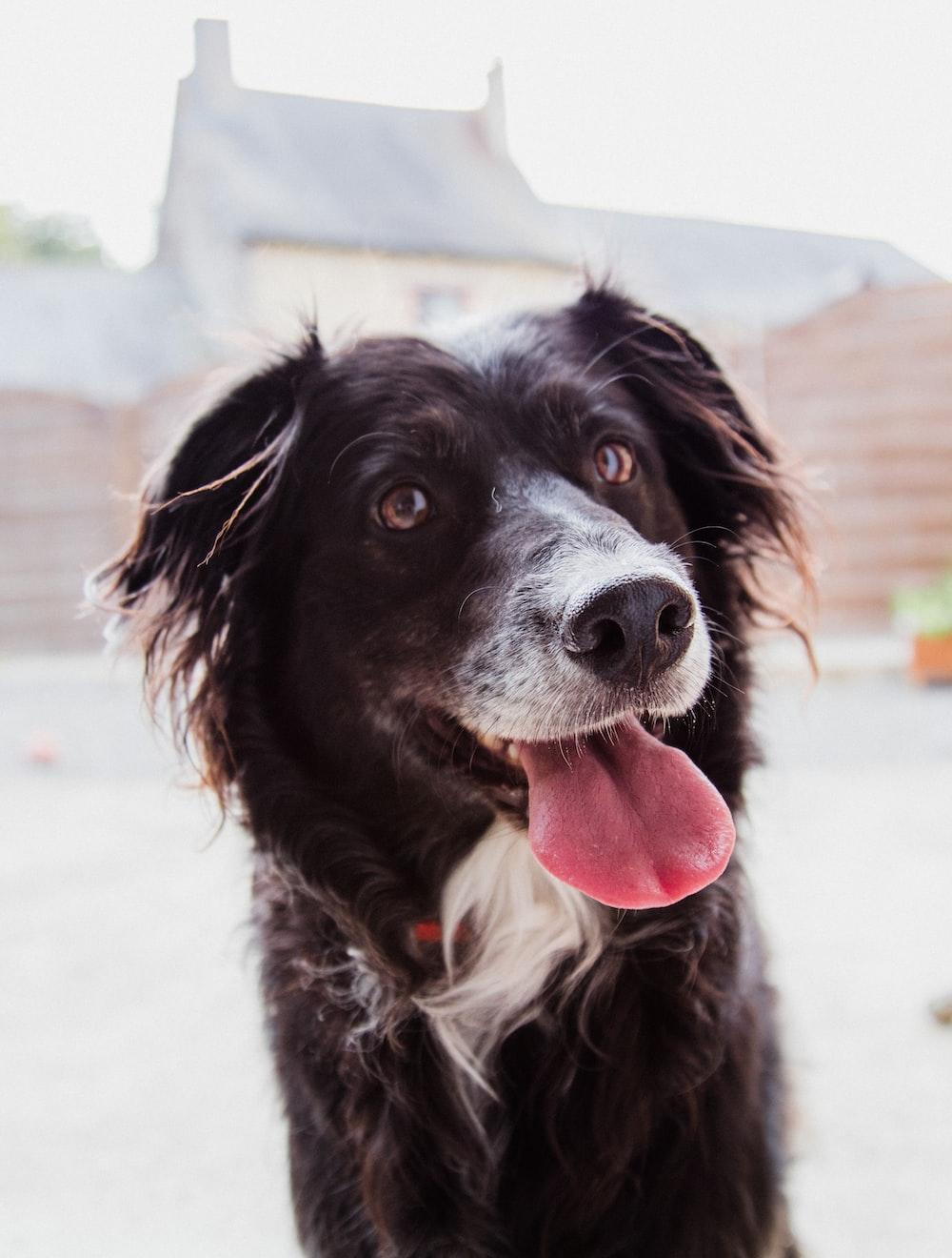 closeup photo of brown dog