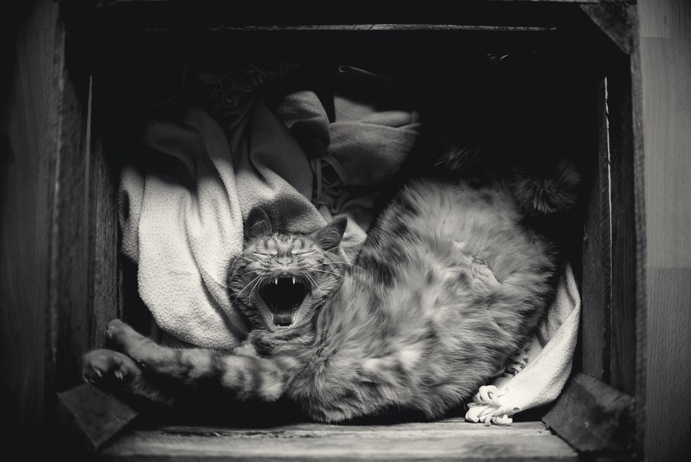 grayscale photography of cat inside the box
