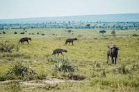 animals on green grass field at daytime