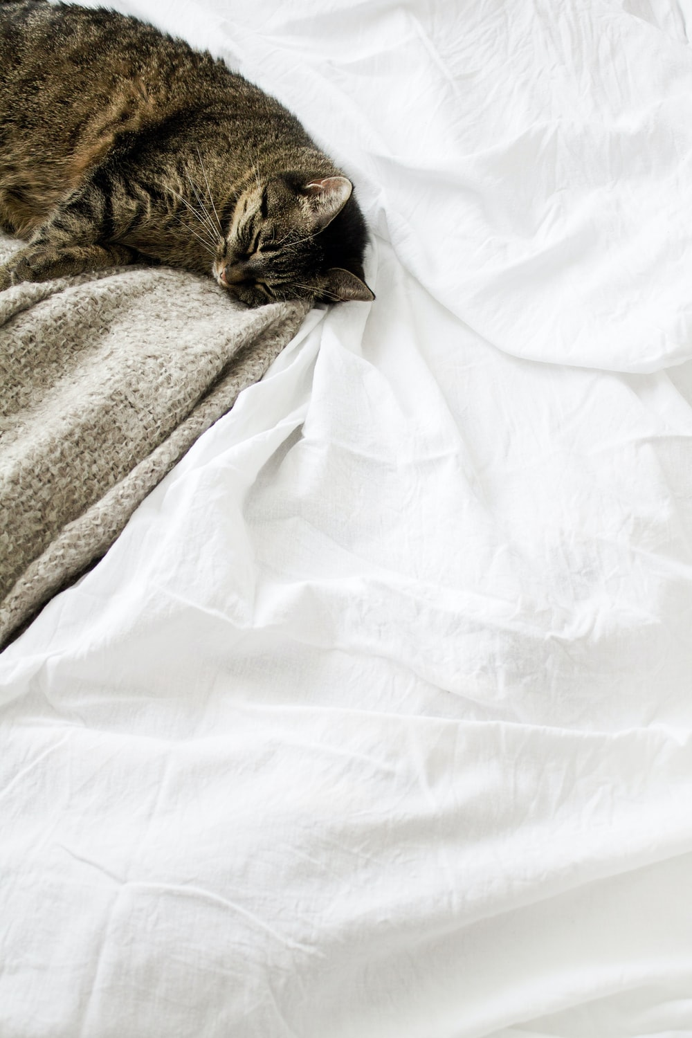 brown tabby cat laying on white textile