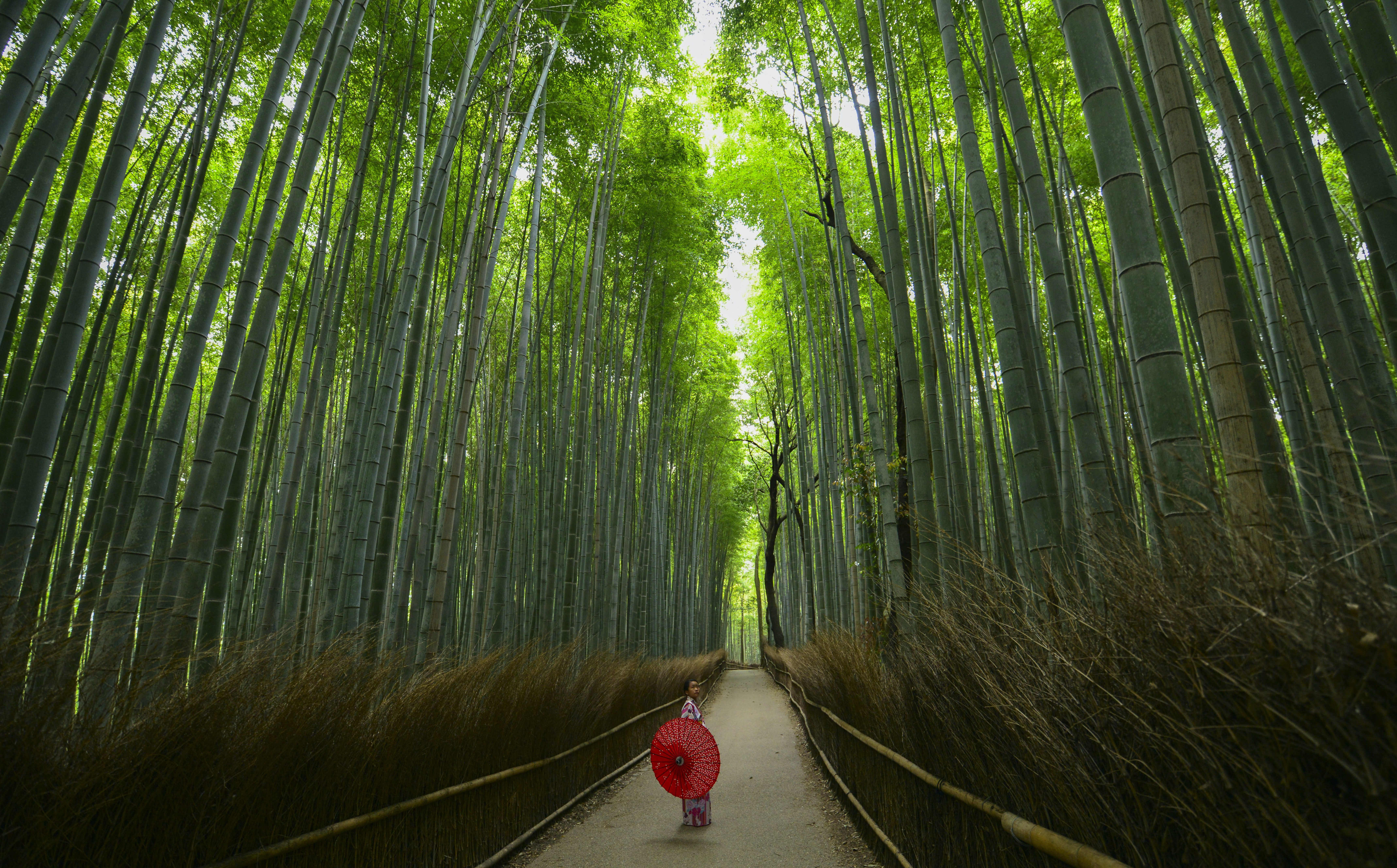 person standing between tall trees