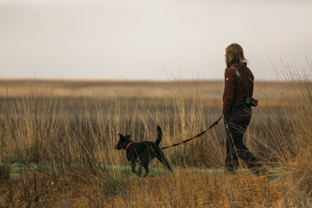 woman in brown jacket and black pants walking with black labrador retriever on brown grass field