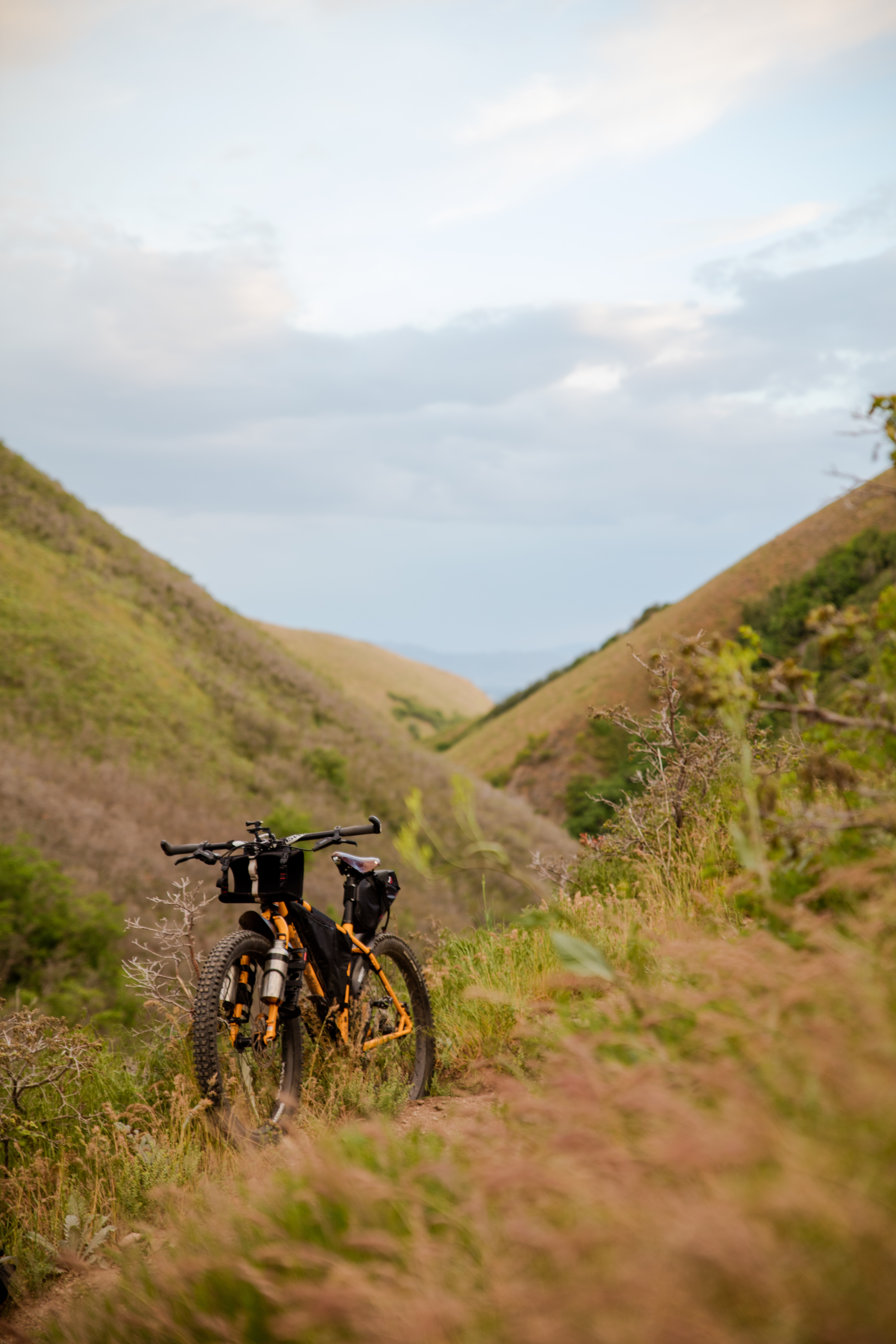 black and yellow mountain bicycle on green grass