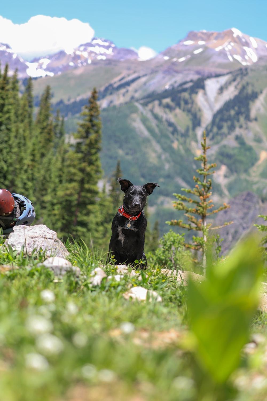 shallow focus photography of short-coated black dog sitting